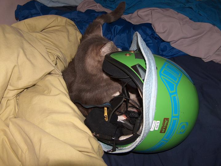The cat in the helmet??: 2008:04:29 23:45:29
