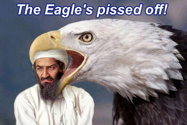 sep11-eaglepissedoff.jpg